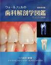 【ウォールフェルの歯科解剖学図鑑<ペーパーバック普及版>】を見る